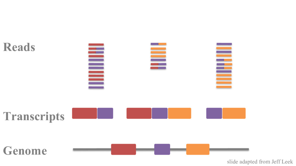 Genome Transcripts Reads slide adapted from Jef...
