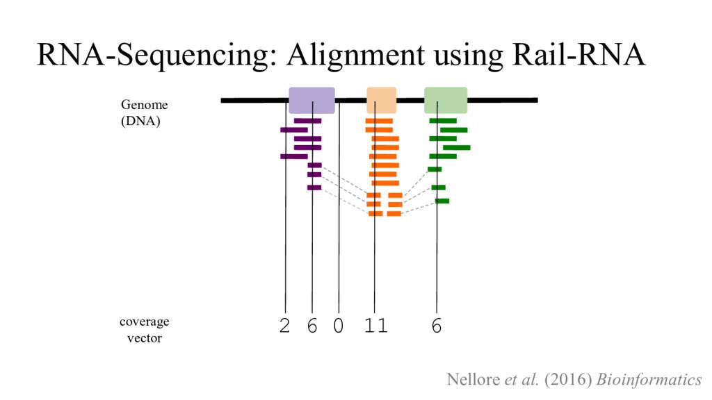 coverage vector 2 6 0 11 6 Genome (DNA) RNA-Seq...