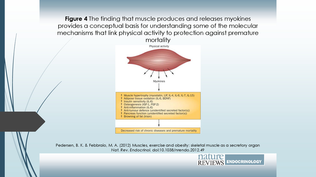 Figure 4 The finding that muscle produces and r...