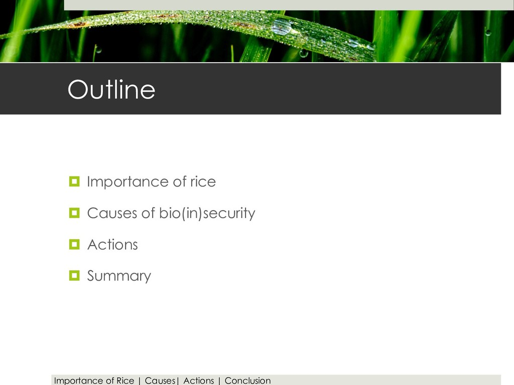 Outline ¤ Importance of rice ¤ Causes of bio(in...