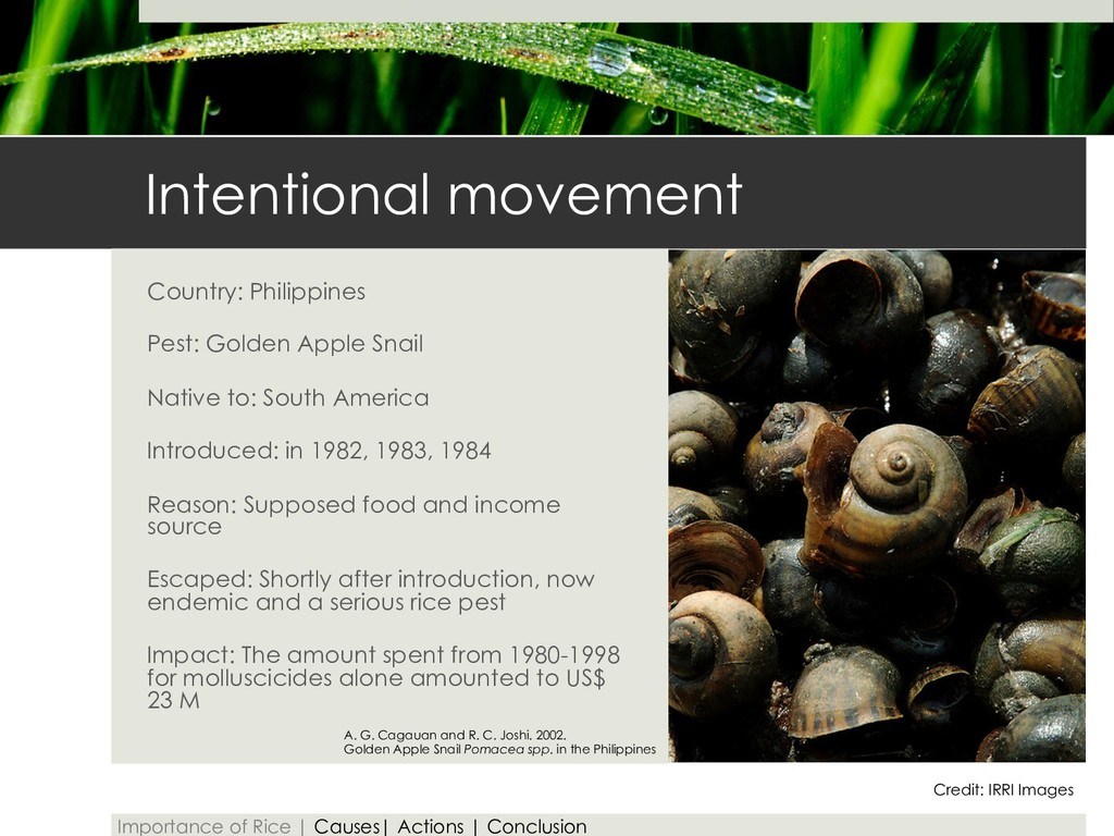 Intentional movement Country: Philippines Pest:...
