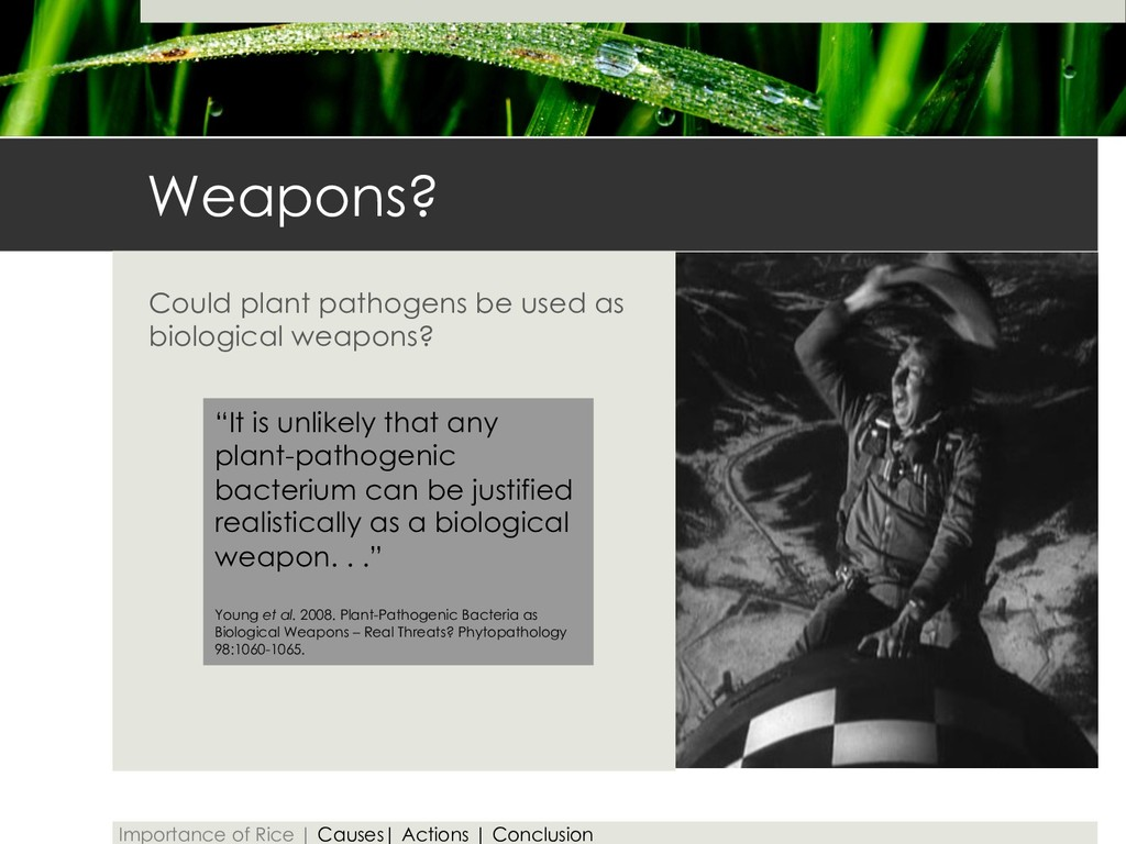 Weapons? Could plant pathogens be used as biolo...