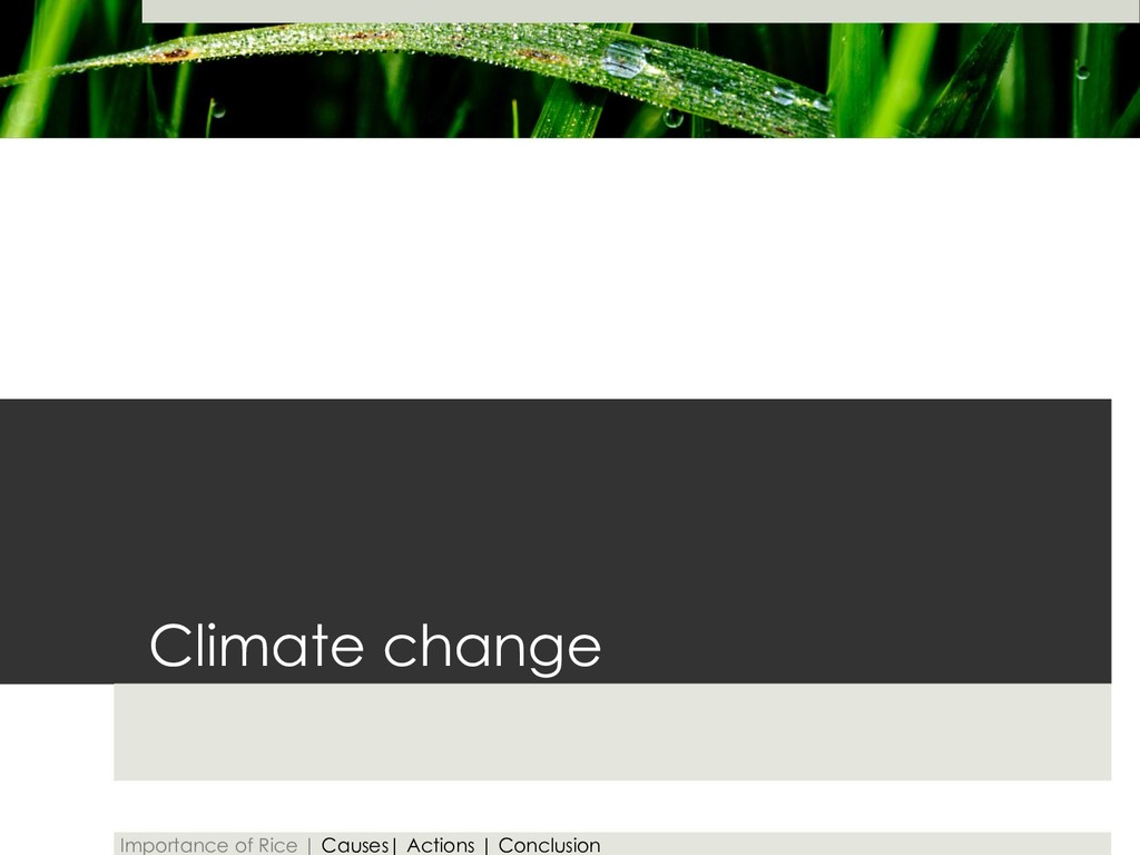 Climate change Importance of Rice | Causes| Act...