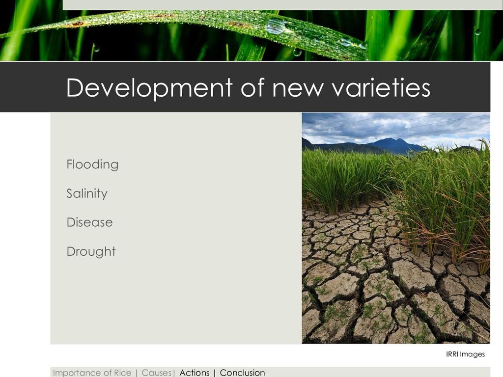 Development of new varieties Flooding Salinity ...