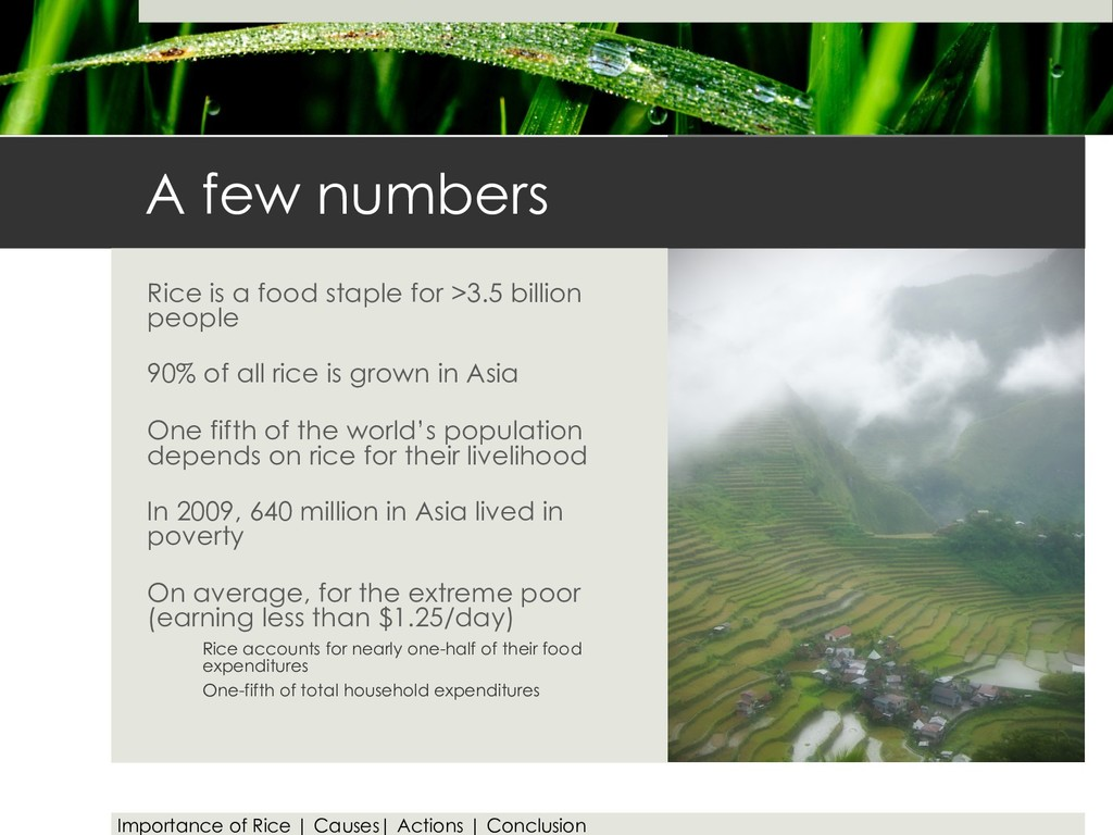 A few numbers Rice is a food staple for >3.5 bi...