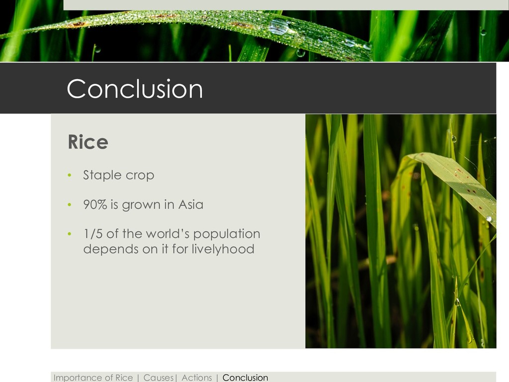 Conclusion Rice • Staple crop • 90% is grown in...
