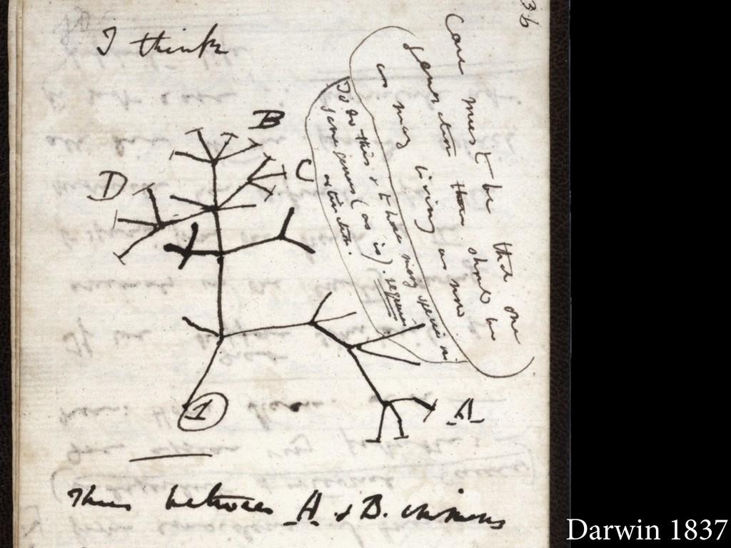 Darwin 1837
