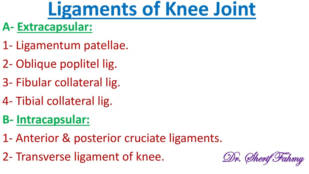 Ligaments of Knee Joint A- Extracapsular: 1- Li...