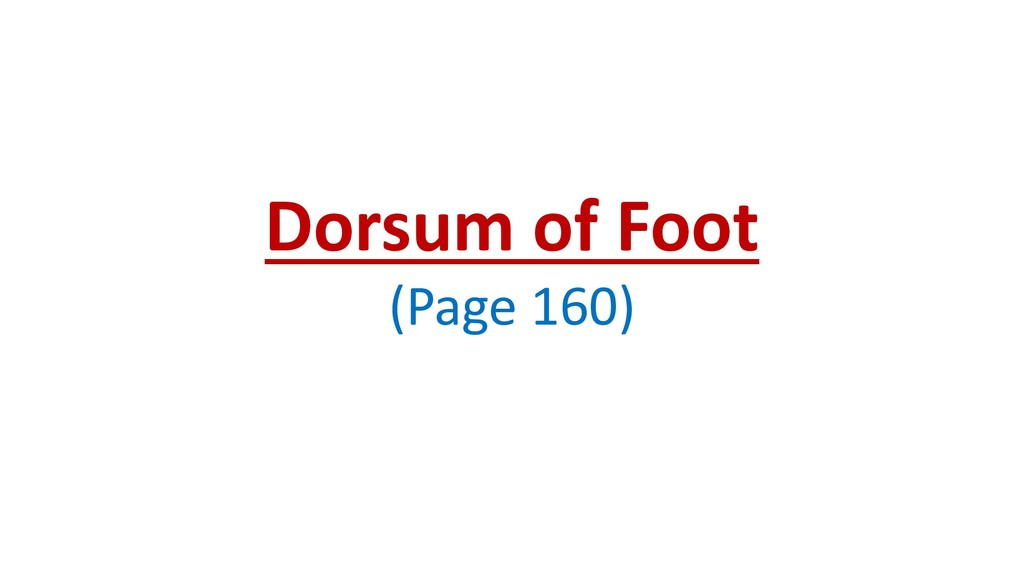 Dorsum of Foot (Page 160)