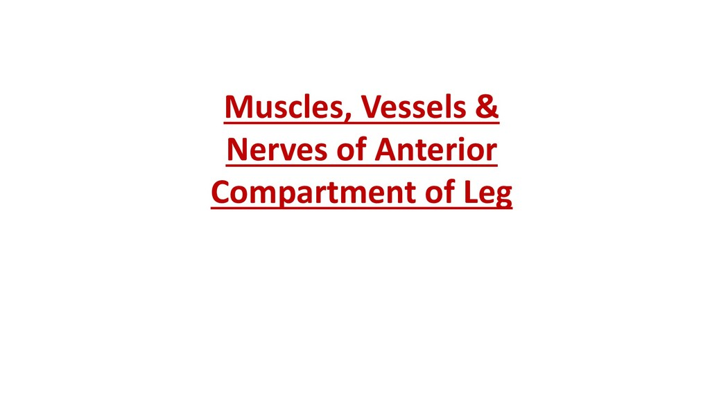 Muscles, Vessels & Nerves of Anterior Compartme...