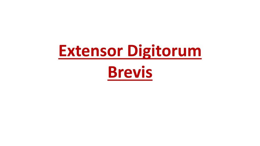 Extensor Digitorum Brevis