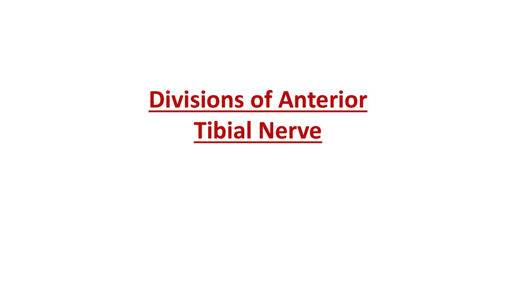 Divisions of Anterior Tibial Nerve