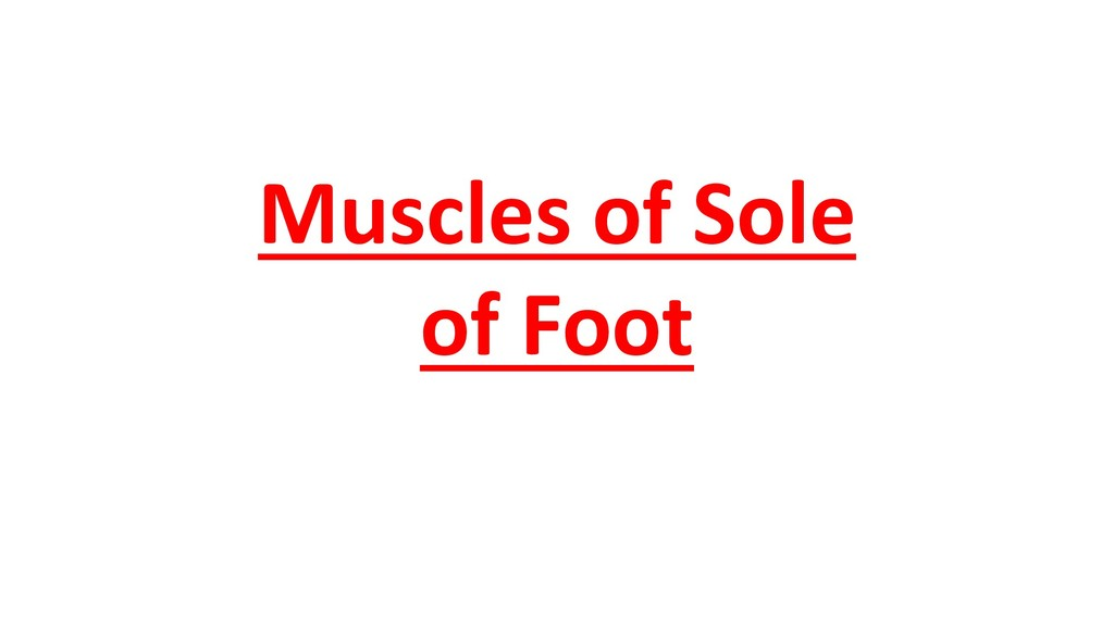 Muscles of Sole of Foot