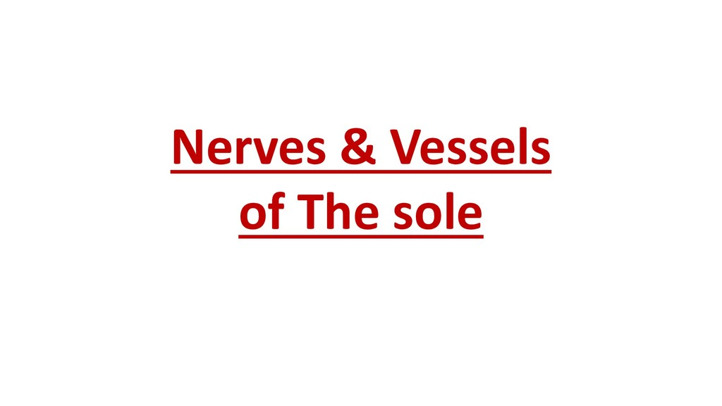Nerves & Vessels of The sole
