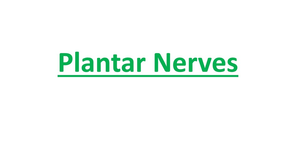 Plantar Nerves