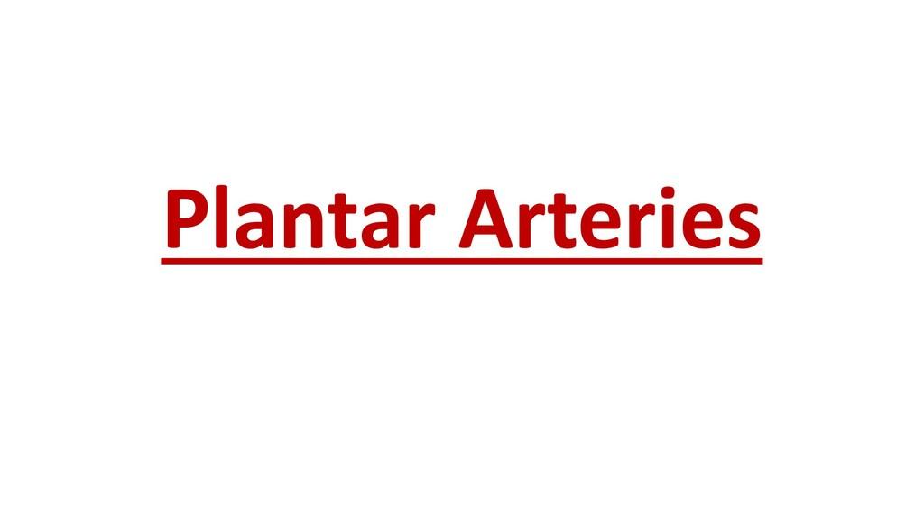 Plantar Arteries