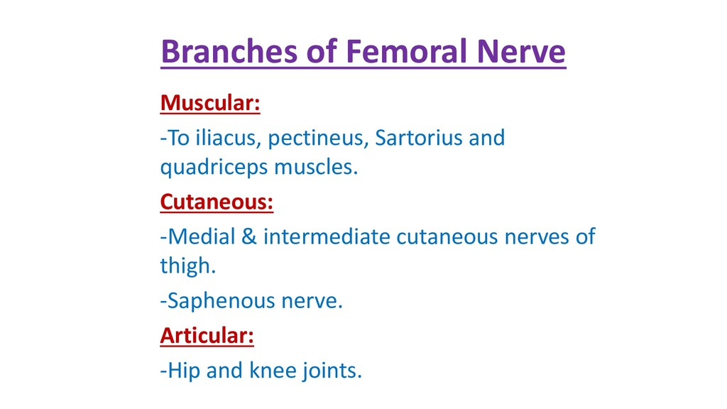 Branches of Femoral Nerve Muscular: -To iliacus...