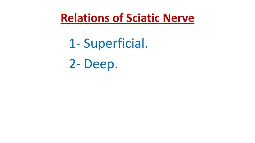 Relations of Sciatic Nerve 1- Superficial. 2- D...