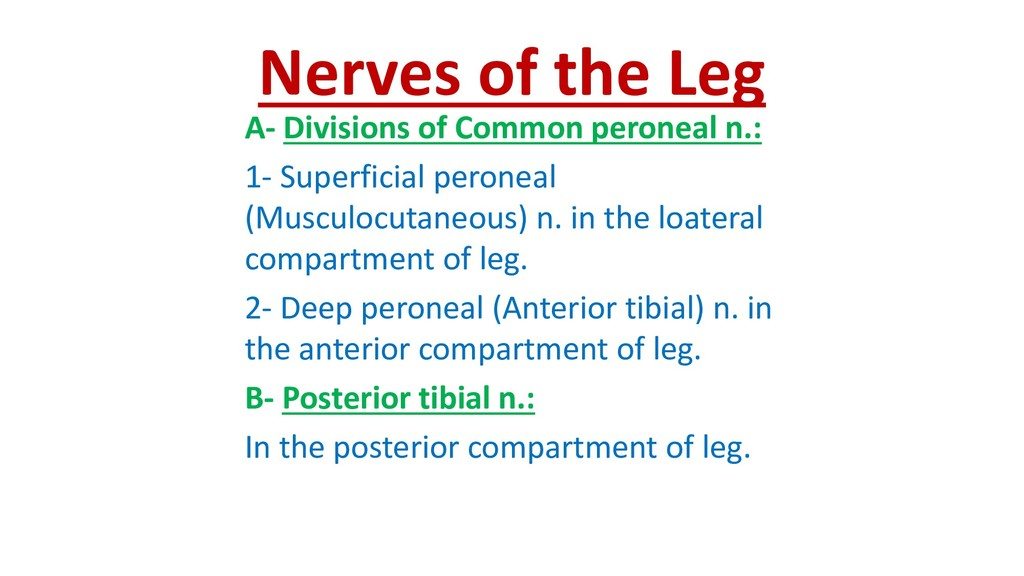 Nerves of the Leg A- Divisions of Common perone...