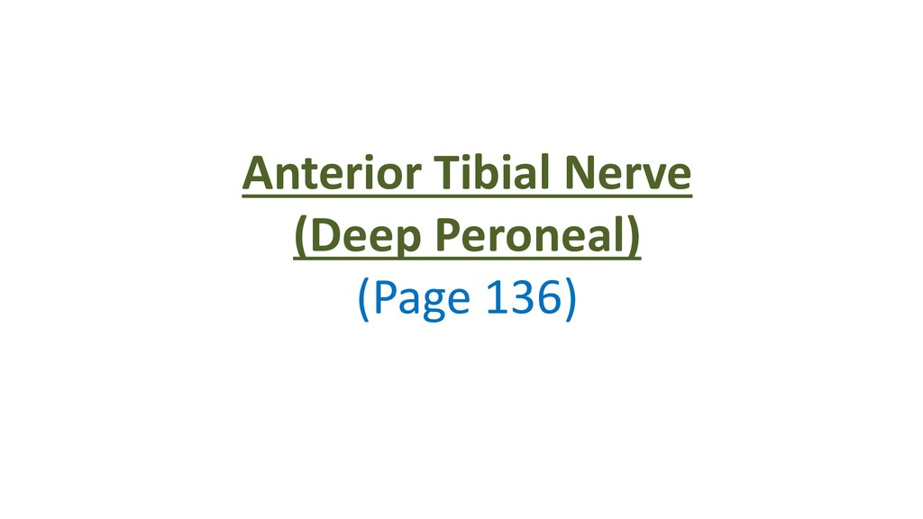 Anterior Tibial Nerve (Deep Peroneal) (Page 136)