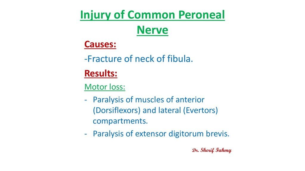 Injury of Common Peroneal Nerve Causes: -Fractu...