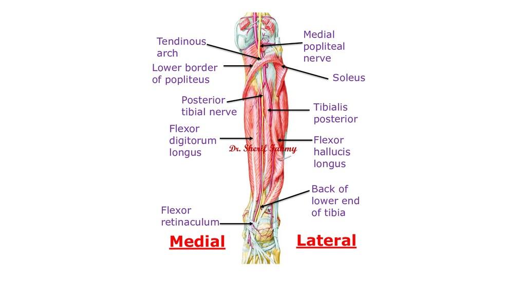 Lower border of popliteus Medial popliteal nerv...