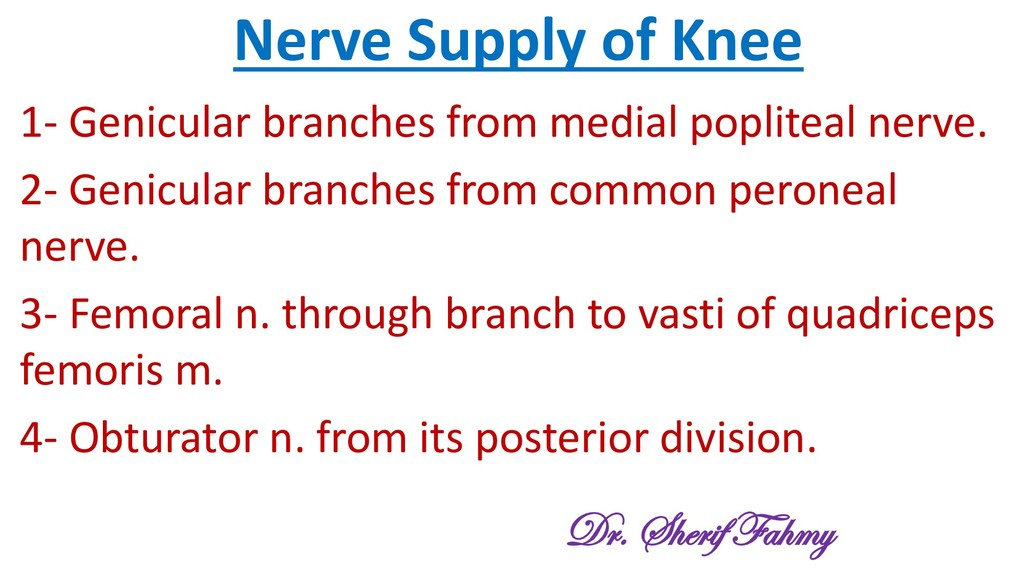 Nerve Supply of Knee 1- Genicular branches from...