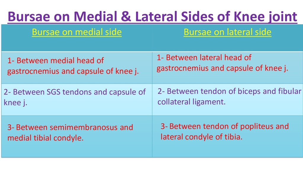 Bursae on Medial & Lateral Sides of Knee joint ...