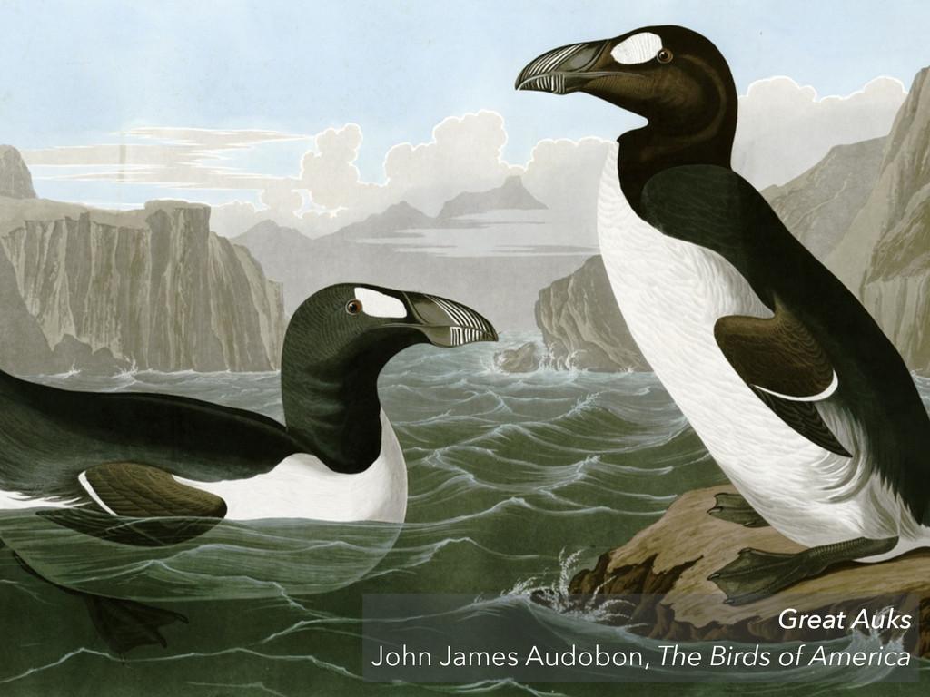 Great Auks John James Audobon, The Birds of Ame...