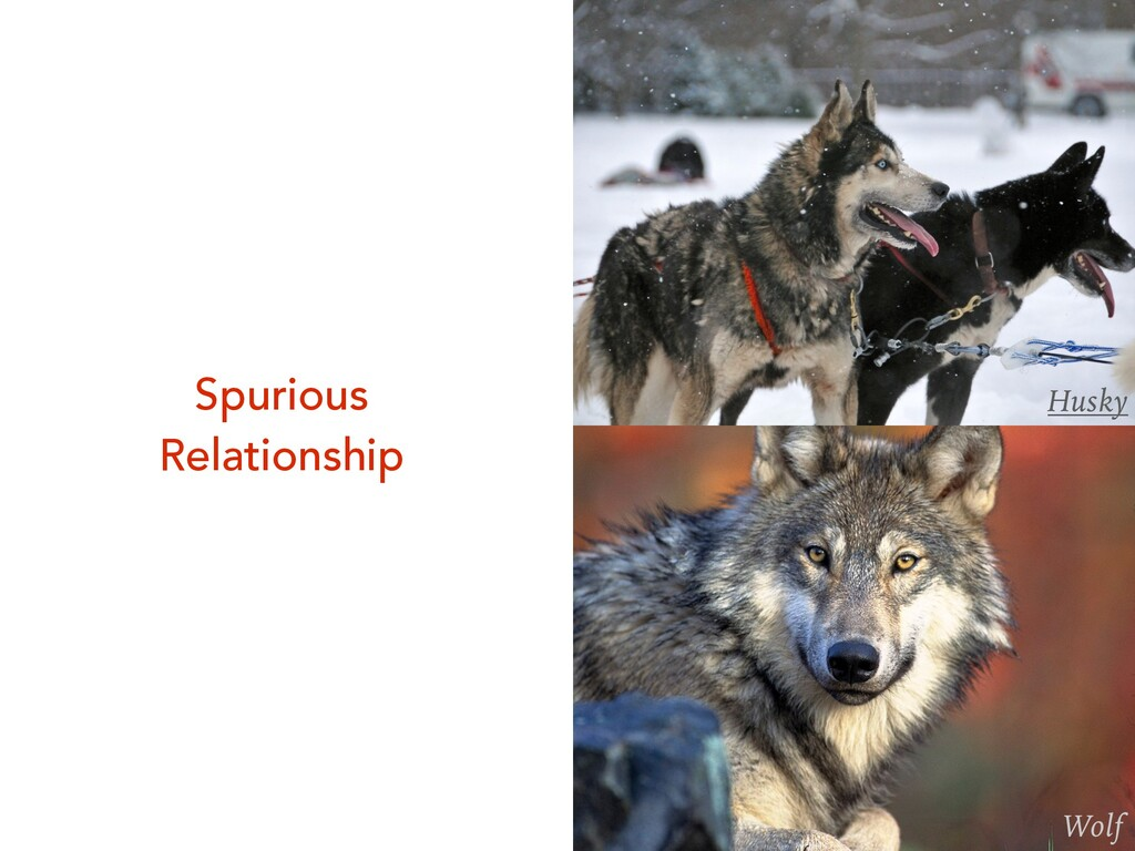 Husky Wolf Spurious Relationship