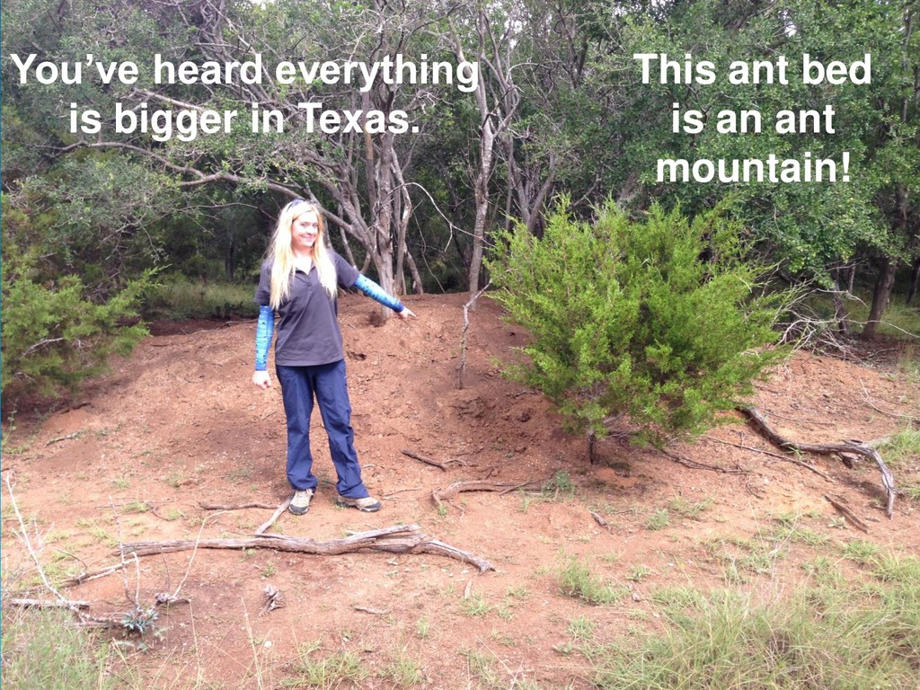You've heard everything is bigger in Texas. Thi...