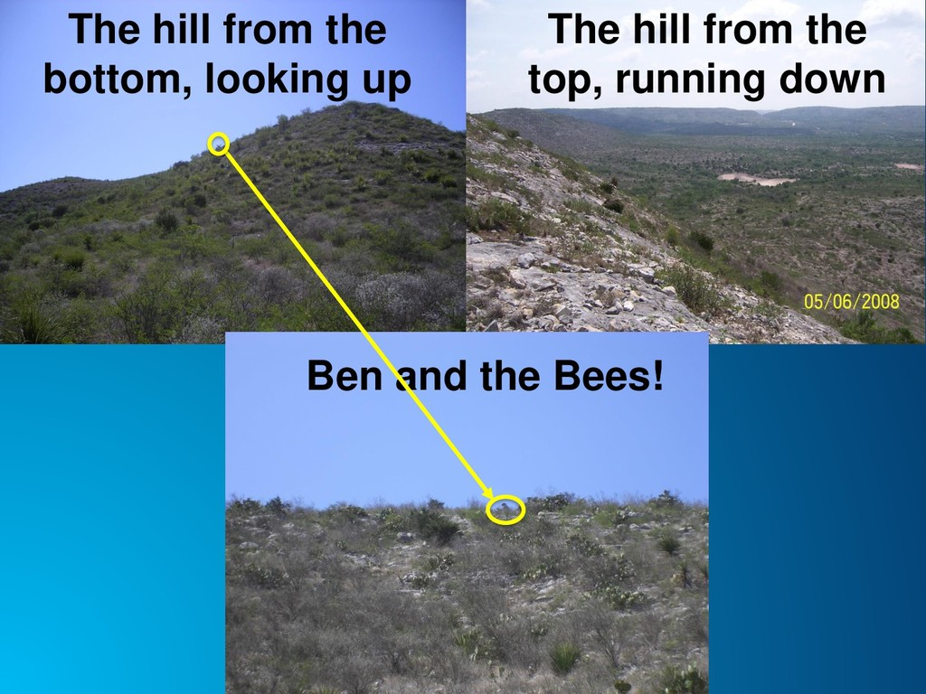 The hill from the top, running down The hill fr...