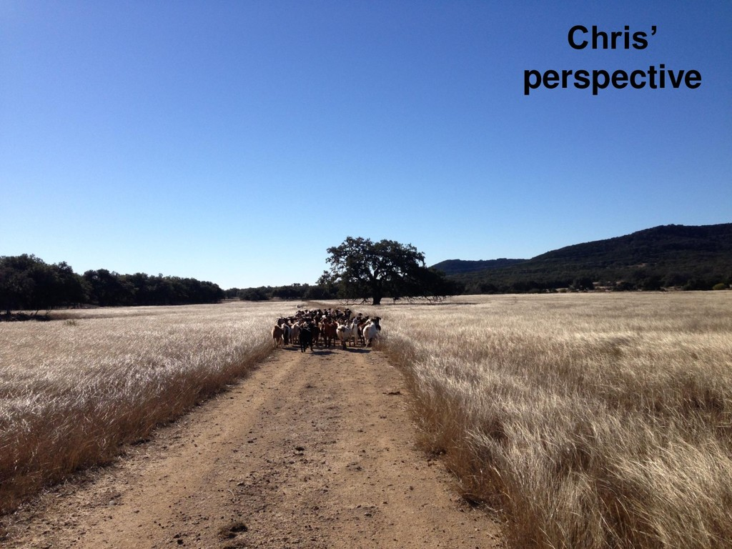Chris' perspective