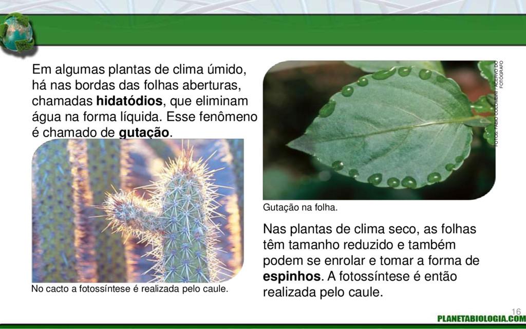 Em algumas plantas de clima úmido, há nas borda...