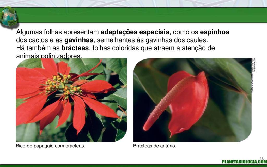 Algumas folhas apresentam adaptações especiais,...