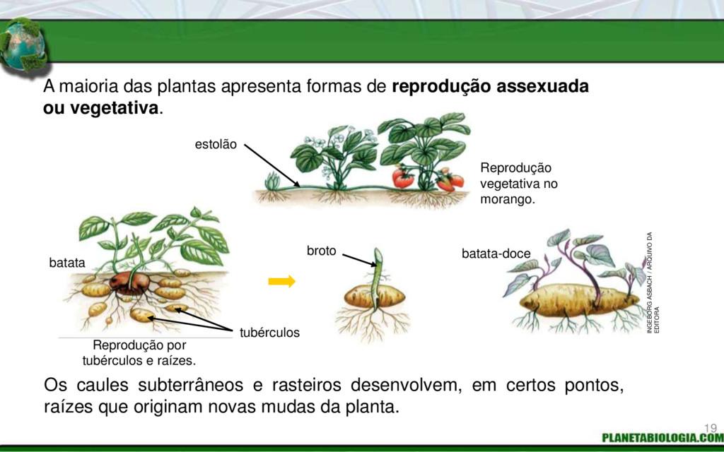 A maioria das plantas apresenta formas de repro...
