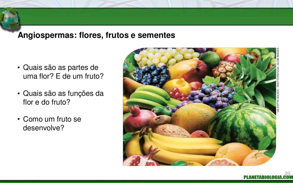 • Quais são as partes de uma flor? E de um frut...