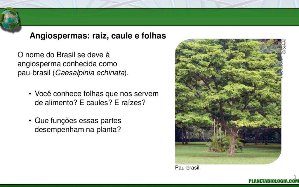 Angiospermas: raiz, caule e folhas • Você conhe...