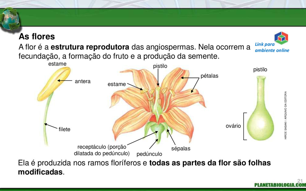 As flores Ela é produzida nos ramos floríferos ...