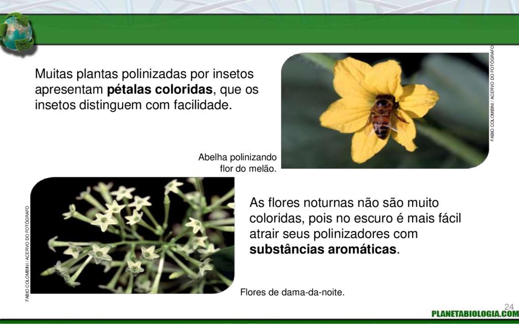 Muitas plantas polinizadas por insetos apresent...