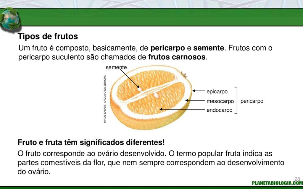Tipos de frutos Fruto e fruta têm significados ...