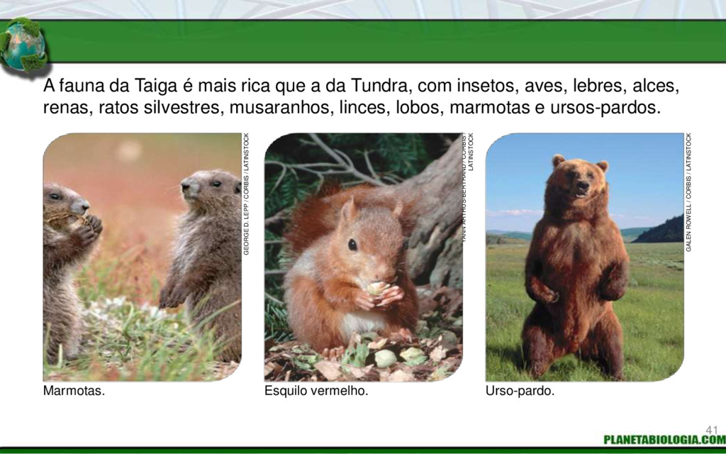 A fauna da Taiga é mais rica que a da Tundra, c...