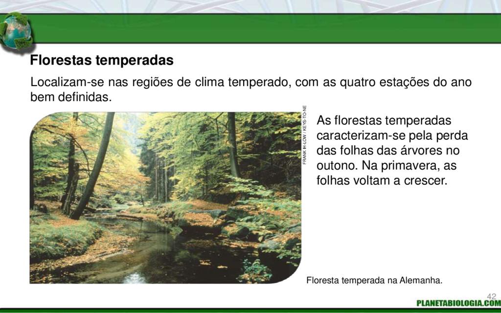 Florestas temperadas As florestas temperadas ca...