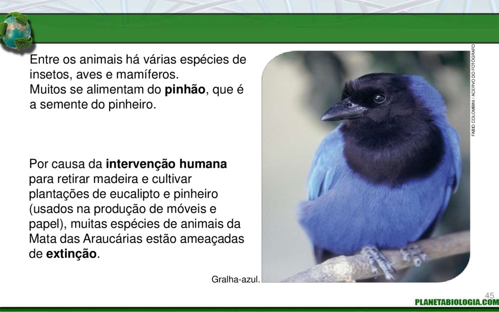 Entre os animais há várias espécies de insetos,...