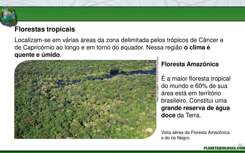 Florestas tropicais É a maior floresta tropical...