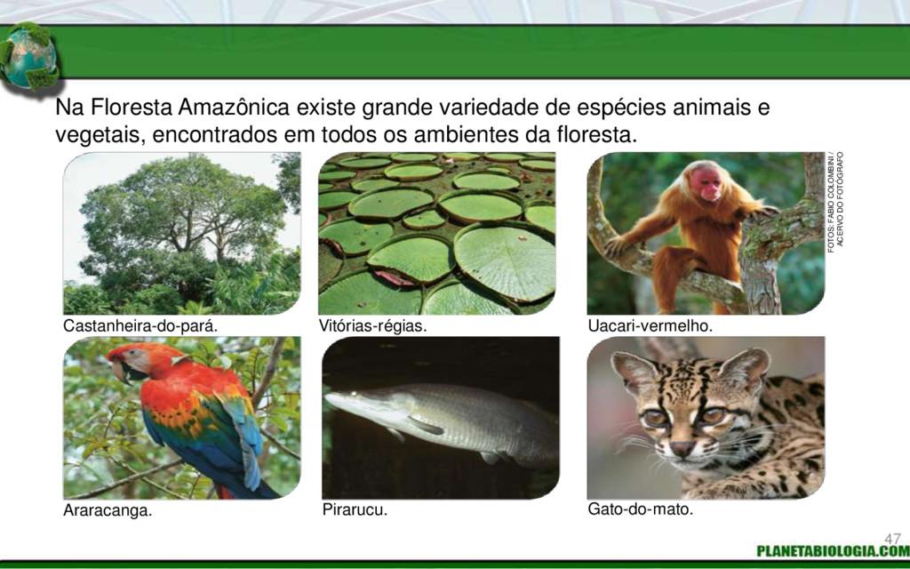 Na Floresta Amazônica existe grande variedade d...