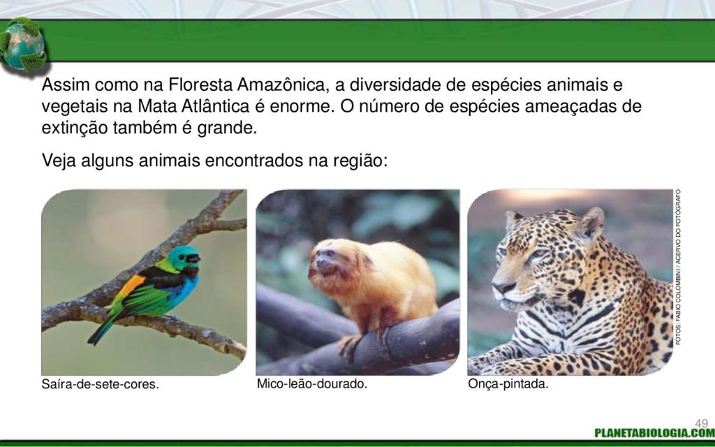 Assim como na Floresta Amazônica, a diversidade...