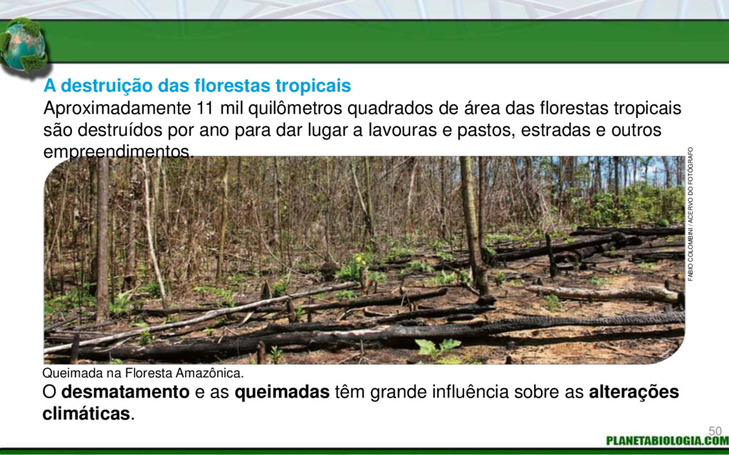 A destruição das florestas tropicais O desmatam...