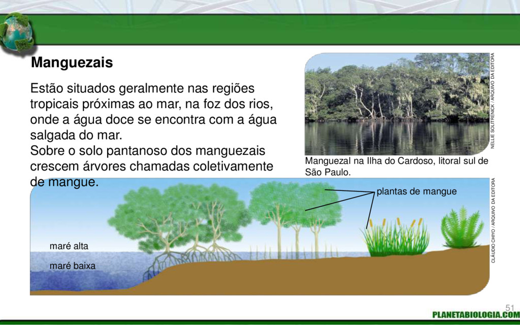 Manguezais Manguezal na Ilha do Cardoso, litora...