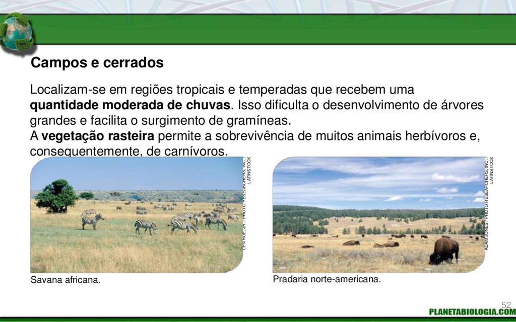 Campos e cerrados Savana africana. Pradaria nor...